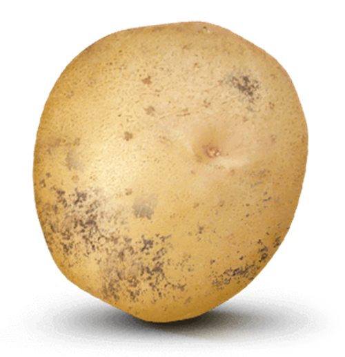 Potato with 21,000 value on it