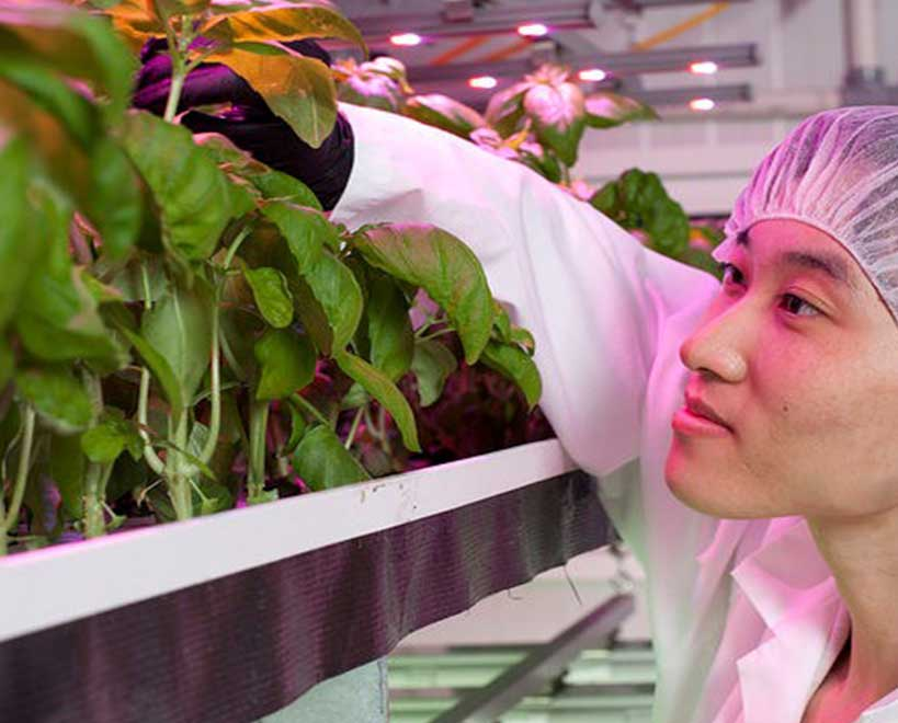 Truleaf employee inspecting plants