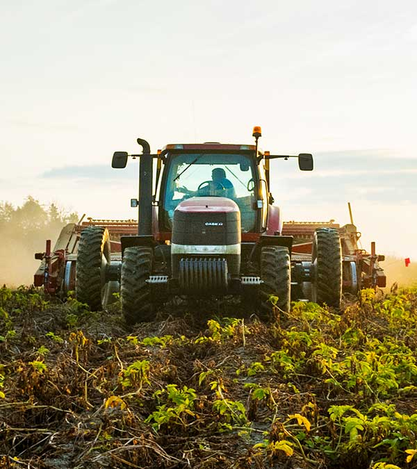 Tractor working in potato field