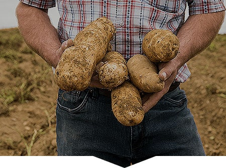 Farmer holding potatoes in his arms m