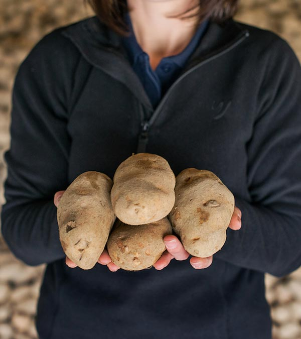 Person-holding-potatoes-mobile.jpg